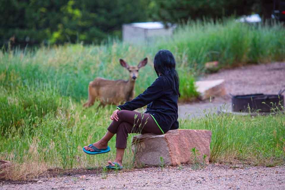 Colorado Camping Eagle Campground wildlife